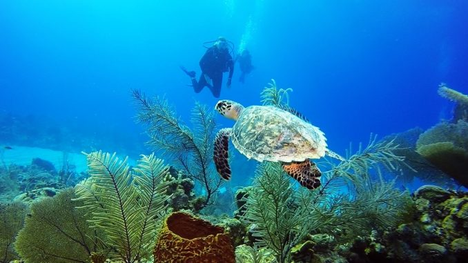 All inclusive resorts for scuba diving