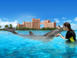 All inclusive swim with dolphins