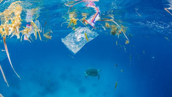 Marine flora mixes with plastic packaging at the water's surface. Below, a green sea turtle swims away from the trash.