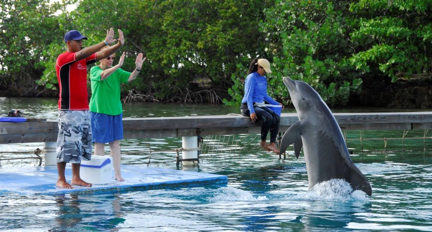 Training dolphins at Anthony's Key Resort