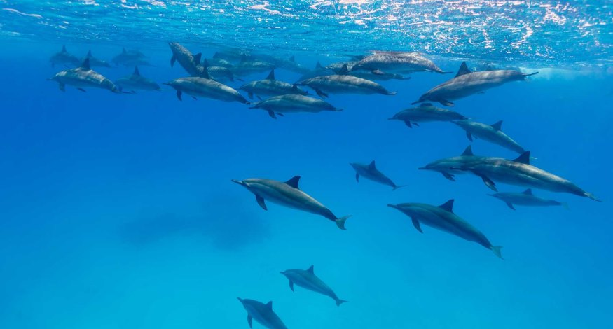 Dolphins at Bahia Principe resort