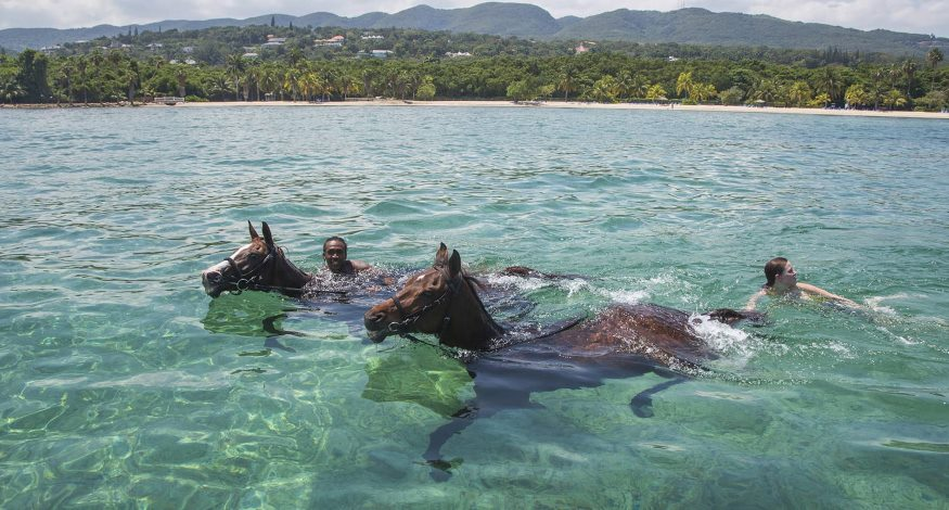 Swimming with horses at Half Moon, Jamaica