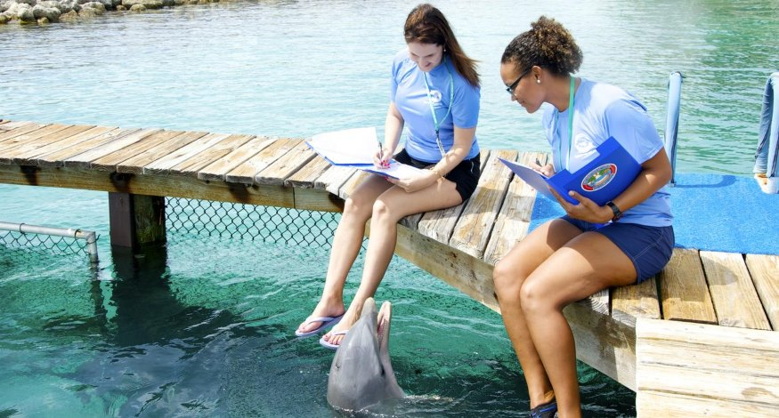 Dolphin training at Sandals Royal Bahamian